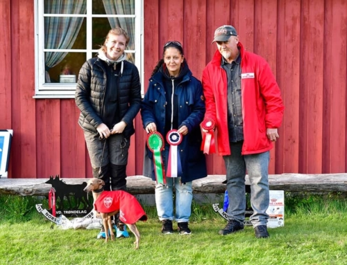 Brand new Norwegian Lure Coursing Champion