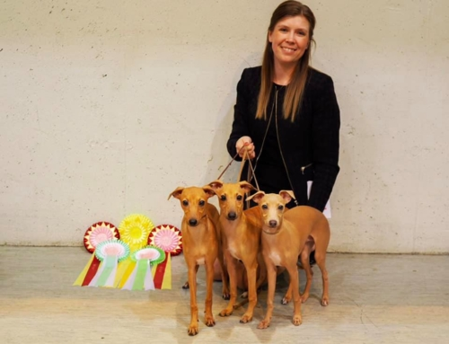 Dog Show weekend in Letohallen