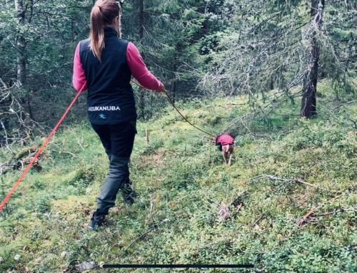 Tracking Course with Daisy