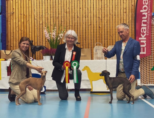 Sighthound speciality dog show